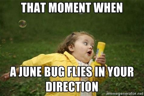 Bug Memes - bug meme related keywords suggestions bug meme long tail keywords