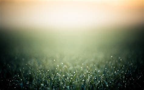 dew-grass-nature-wet-green-2560x16002.jpg - Dana Palmer ...