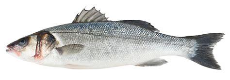 sea bass fish sea bass fish on friday