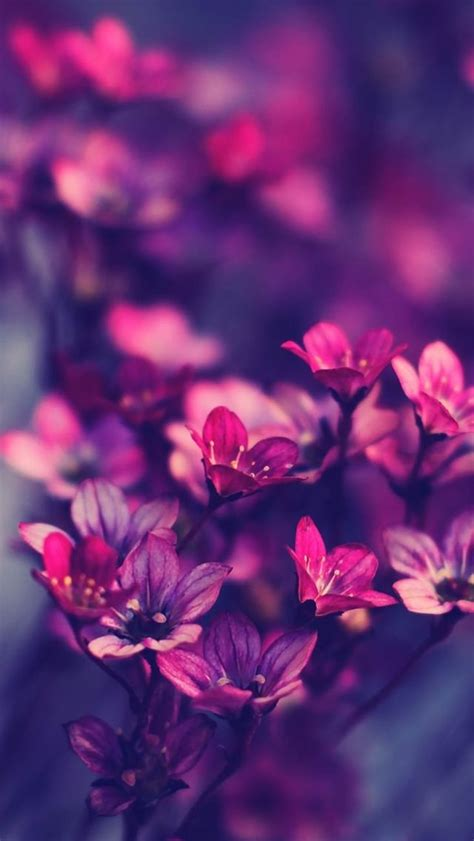 purple iphone wallpaper purple wildflowers iphone 5s wallpaper http www