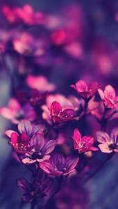Purple wildflowers #iPhone #5s #Wallpaper   http://www ...