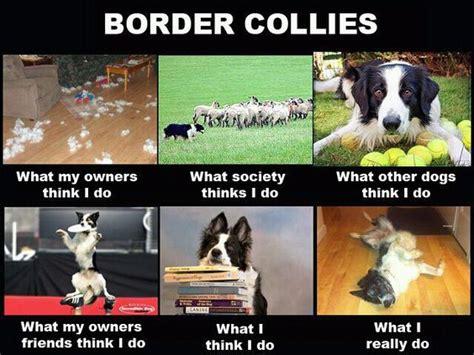 Border Collie Meme - toys memphis and haha on pinterest