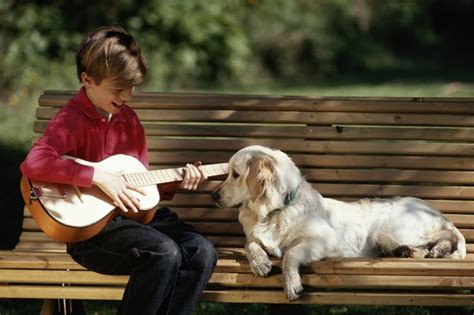 types   affect  dogs behavior pets