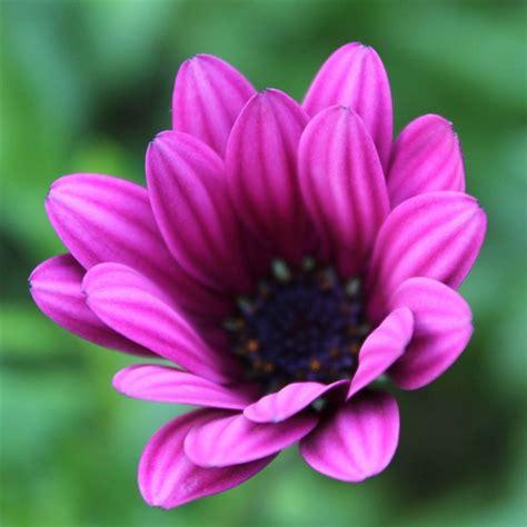 ideas  flower bokeh  pinterest meadow