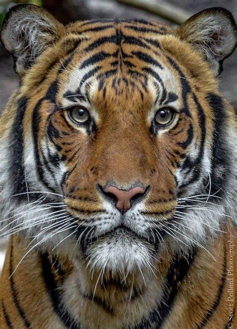 best images about beast beauty pinterest