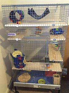 Cage Ideas & Decorations III – Sammi's Chinchillas & Pet ...