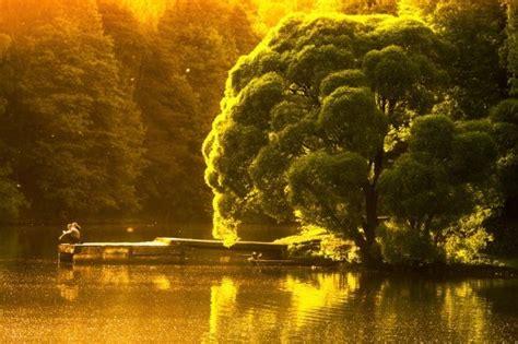 world  beautiful trees photography weneedfun