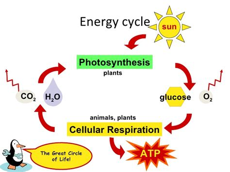 module  lesson  photosynthesis
