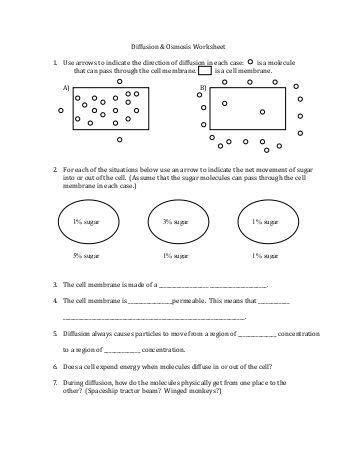 Worksheet Diffusion And Osmosis Worksheet Hunterhq Free Printables Worksheets For Students