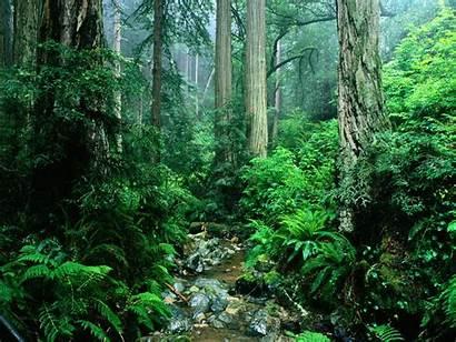 America South Largest Rainforest Tropical Basin River