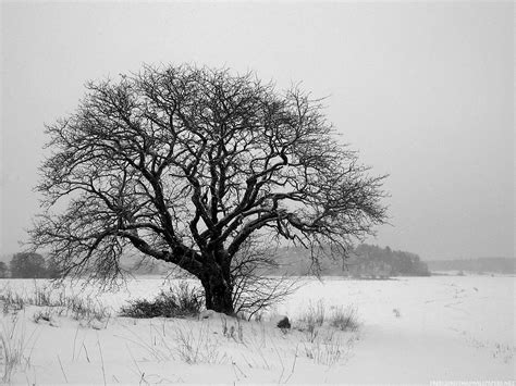 the colorless of winter chroma zone