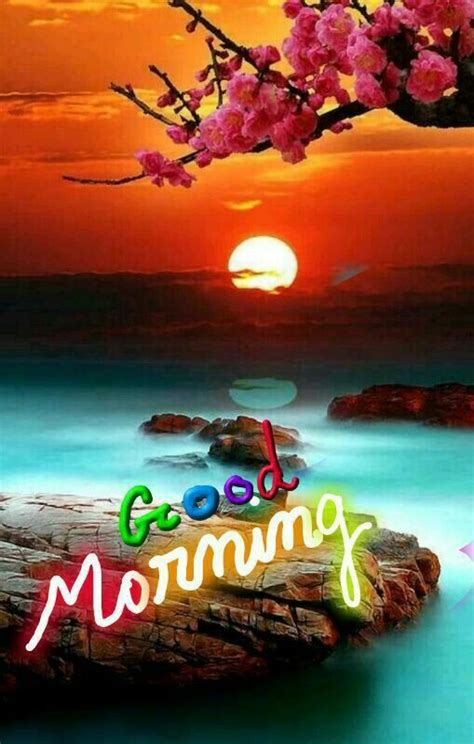 beautiful sun good morning pictures   images