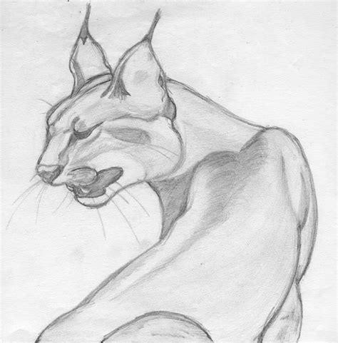 pencil drawing big cat  fanimation  deviantart