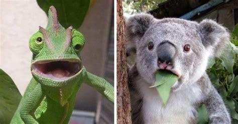 pictures  animals  caught  surprise