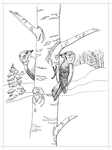 woodpecker coloring pages   print woodpecker