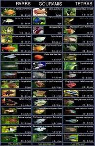 list of molly breeds my favorite aquarium fish by far
