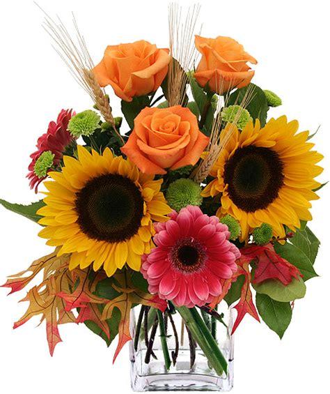 Flamboyantes Fleurs D' Automne