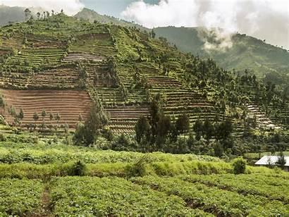 Coffee Indonesia Indonesian Landscape Semi Trading Harvest