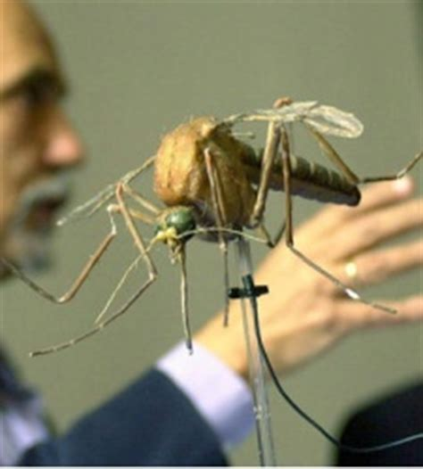 maqueta dengue mosquito malaria efe jpg
