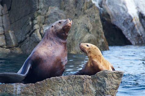major marine kenai fjords cruise wildlife cruise  seward