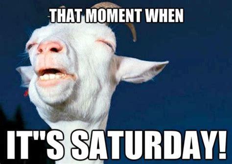 Saturday Memes 18 - 52 most funny saturday memes images jokes greetyhunt