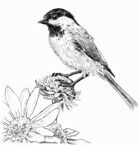chickadee   ink  waughtercolors  deviantart