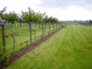 Comment Enlever Les Mauvaises Herbes : b chage sous les arbres paliss s et les vignes pour ~ Melissatoandfro.com Idées de Décoration