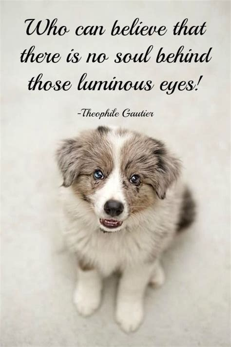 dog quotes  proverbs images  pinterest