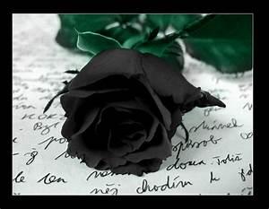 Black Rose - Gothic Photo (28044558) - Fanpop