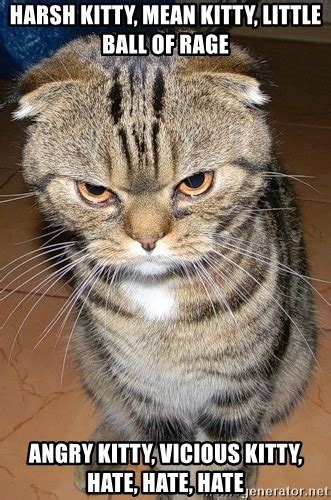 Mean Kitty Meme - harsh kitty mean kitty little ball of rage angry kitty vicious kitty hate hate hate