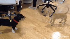 The Barkpost GIFs - Find & Share on GIPHY