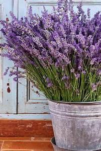 Lavendel Pflanzen Im Topf : ideen mit lavendel n tzliche infos rund um die duftpflanze lavendel im topf garten ~ Frokenaadalensverden.com Haus und Dekorationen