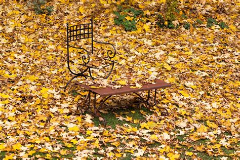 Garten Auch Im Herbst by Herbst Der Eigentliche Fr 252 Hling Im Garten St 246 Ger