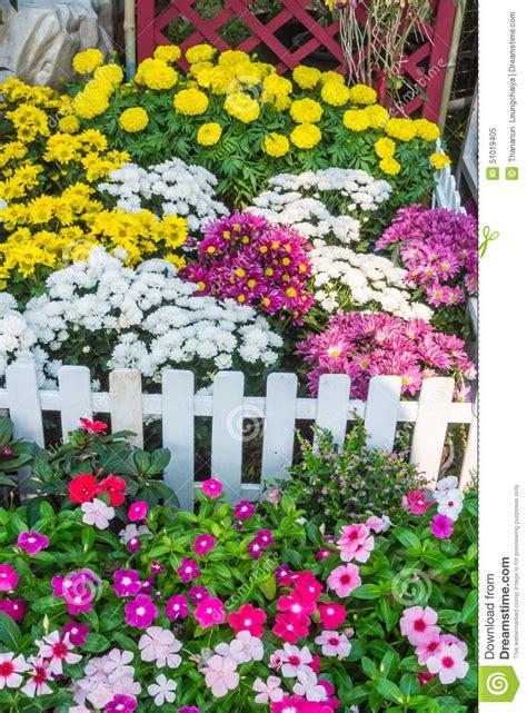 beautiful flower garden stock photo image 51019405