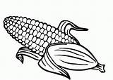 Corn Coloring sketch template