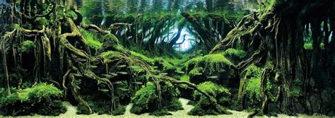 Aquascaping World by Top 7 Winners Of The World S Greatest Aquascaping