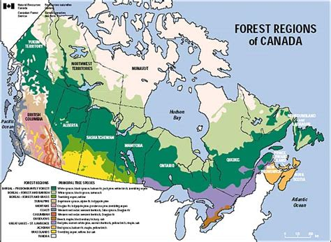 Map Canada Boreal Forest Universe Map Travel And Codes