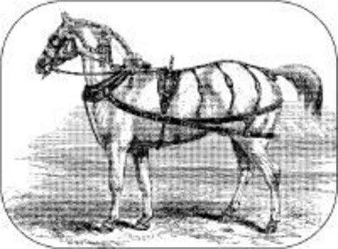 Home Remedies For Horse People Expert Advice On Horse