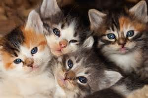 search cats what to do if you find an abandoned litter of kittens