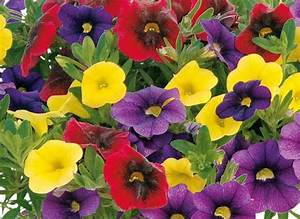 Blumen Für Südbalkon : balkonpflanzen die 39 s sonnig m gen balkon pflanzen ~ Watch28wear.com Haus und Dekorationen