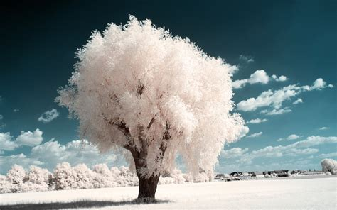 white trees part iv by myinqi on deviantart