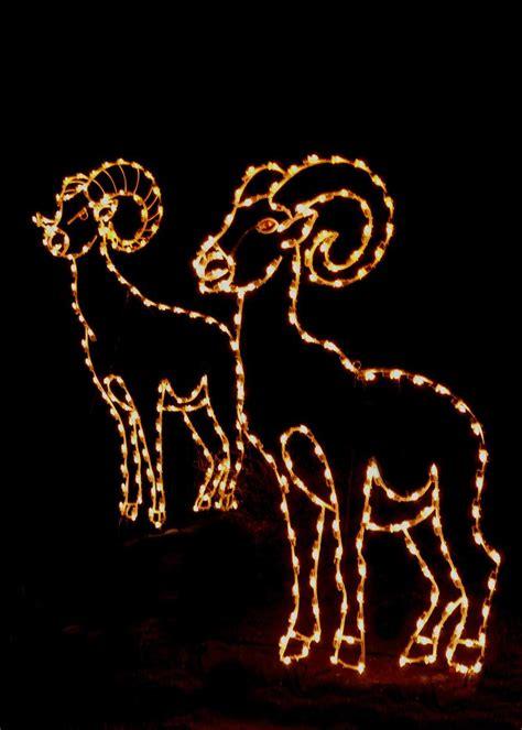 wild lights palm desert wildlights holiday festival at the living desert palm