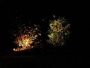 Gartengestaltung Mit Licht : gartengestaltung mit licht axel seifert neunkirchen seelscheid planung und istallierung von ~ Sanjose-hotels-ca.com Haus und Dekorationen