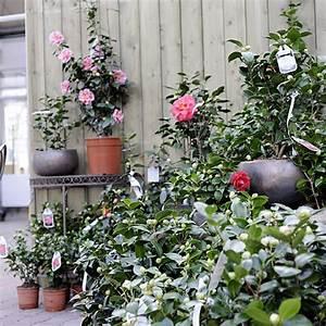Rankhilfe Für Zimmerpflanzen : pflanzen laukart hilden ihr pflanzencenter f r zimmerpflanzen gartenpflanzen und dekorationen ~ Yasmunasinghe.com Haus und Dekorationen