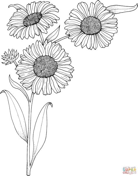 Realistic Sunflowers Coloring Page