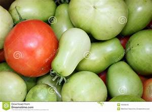 Red And Green Tomatoes Stock Photos - Image: 10948543