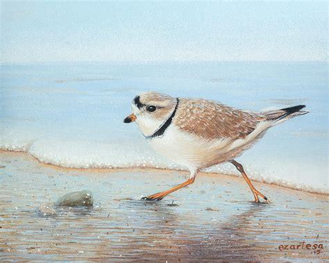 coastal shower piping plover run painting by ezartesa
