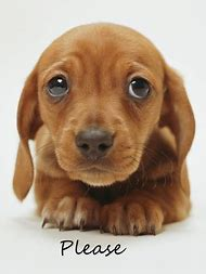 Really Cute Dogs and Puppies