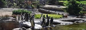 Rostock Zoo Preise : humboldtpinguin im zoo rostock erleben ~ A.2002-acura-tl-radio.info Haus und Dekorationen