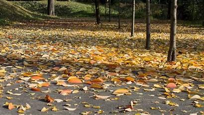 Ground Leaves Orange Yellow Definition Fall Leaf